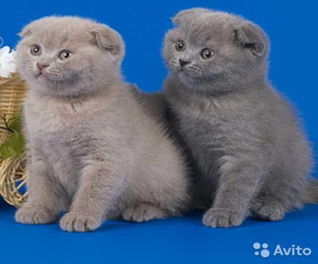 Продам плюшевые котята