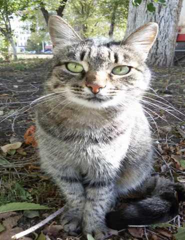 Отдам даром Кошка Мурка, 5 лет.
