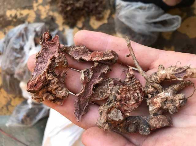 Продам Rhodíola rósea (Радиола розовая )
