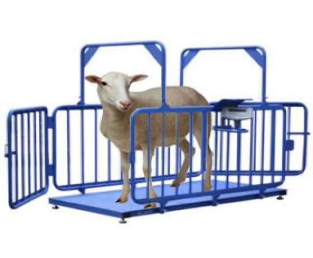 Продам Весы для скота (поросят, коров)