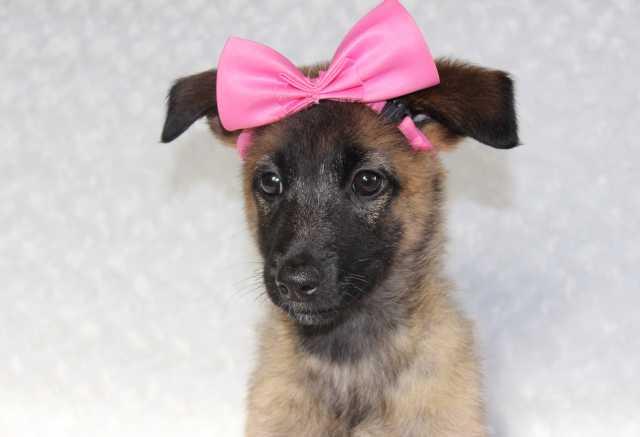 Объявление отдам даром собаку или щенка в перми сколько стоит подать объявление в газете метро