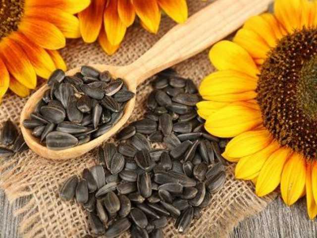 Продам Семена подсолнечника (сорта и гибриды)