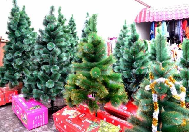 Продам Новогодние живые елки, сосны
