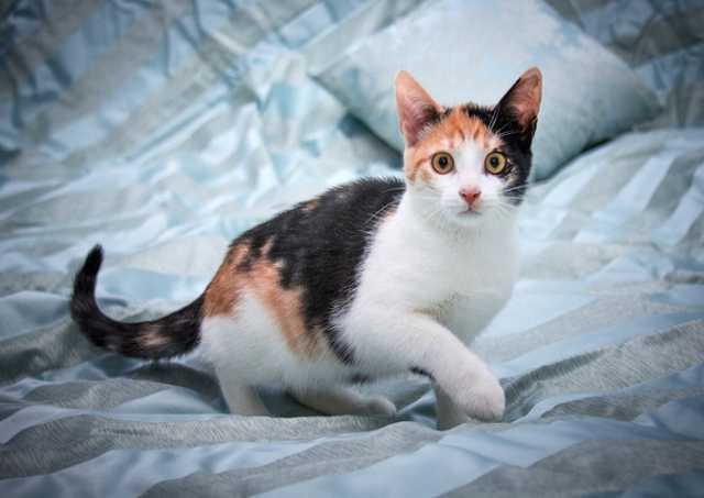 Отдам даром чудесные домашние котята-подростки в дар