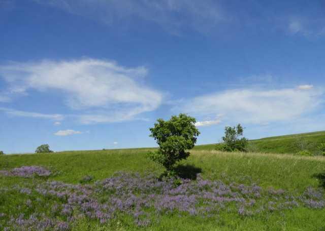 Продам: Земельный участок у лесного массива