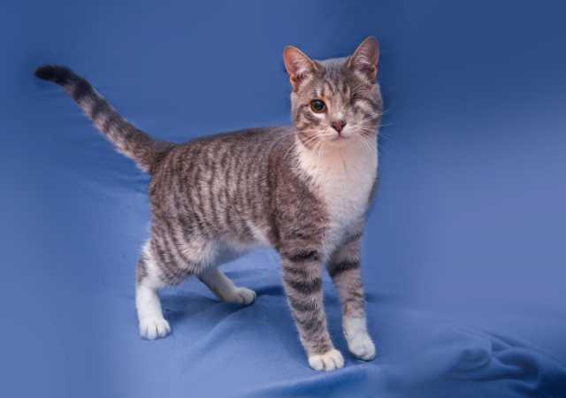 Отдам даром Одноглазый котенок Шурик ищет дом
