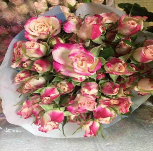 Продам Цветы оптом и в розницу