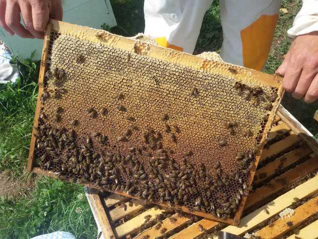 Продам Качественный дальневосточный липовый мёд