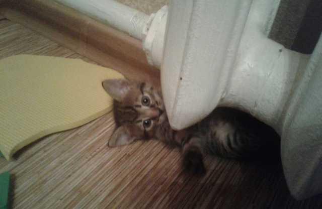 Отдам даром Котёнок 1.5 месяца
