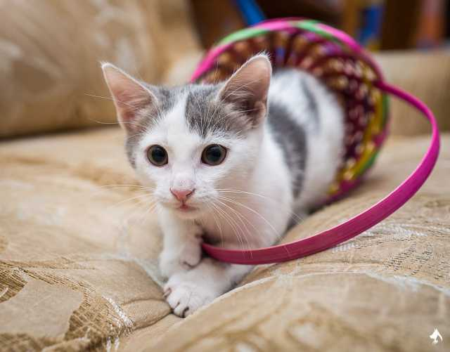 Отдам даром Ищет дом кошечка Рыся.