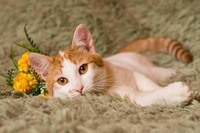 Отдам даром Даня - милый и ласковый котик!