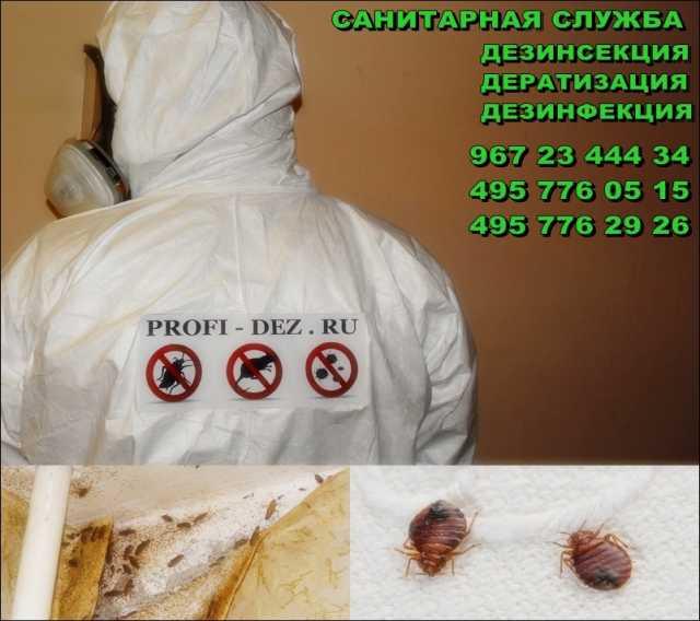 Предложение: Уничтожение насекомых (Дезинсекция)