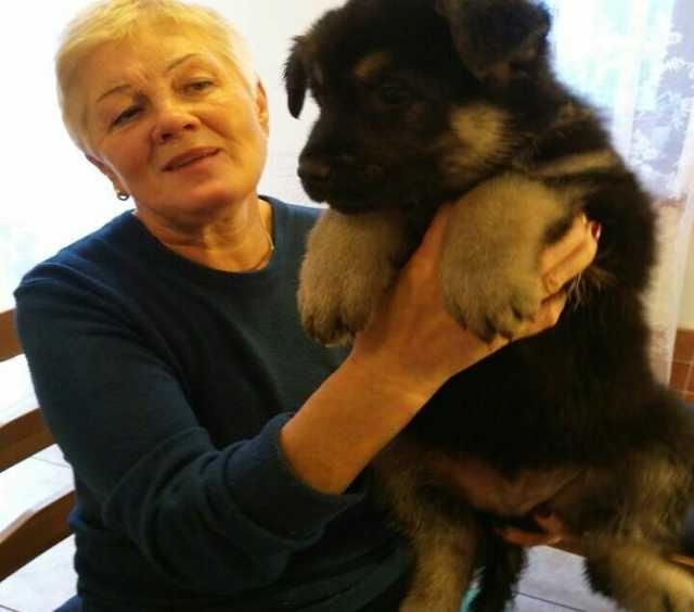 Продам восточноевропейской овчарки щенки