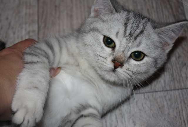 Продам котята