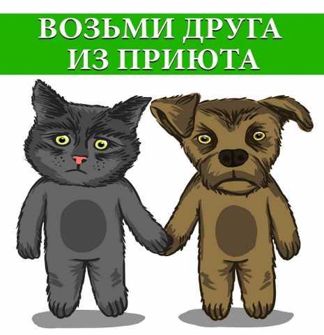 Продам Собаки в приюте
