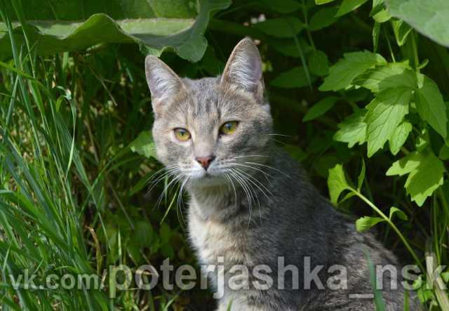 Отдам даром Отдам в добрые руки кошку