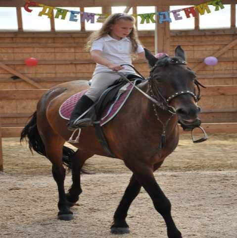 Предложение: Верховая езда обучение