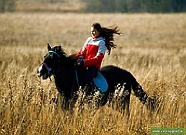 Предложение: Профессиональная фото сьемка на лошадях.