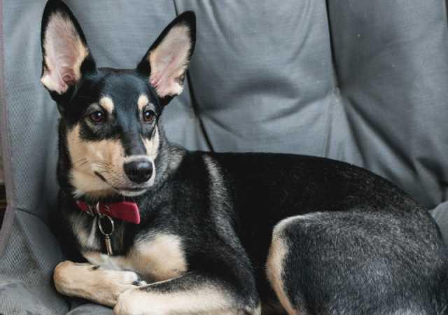 Отдам даром Весёлая, активная собака Маша ищет хозяи