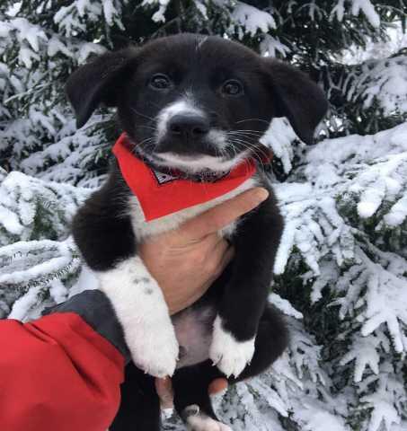 Отдам даром В добрые руки маленькие щенята