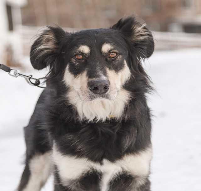 Отдам даром Красивый пес Балу ищет дом!