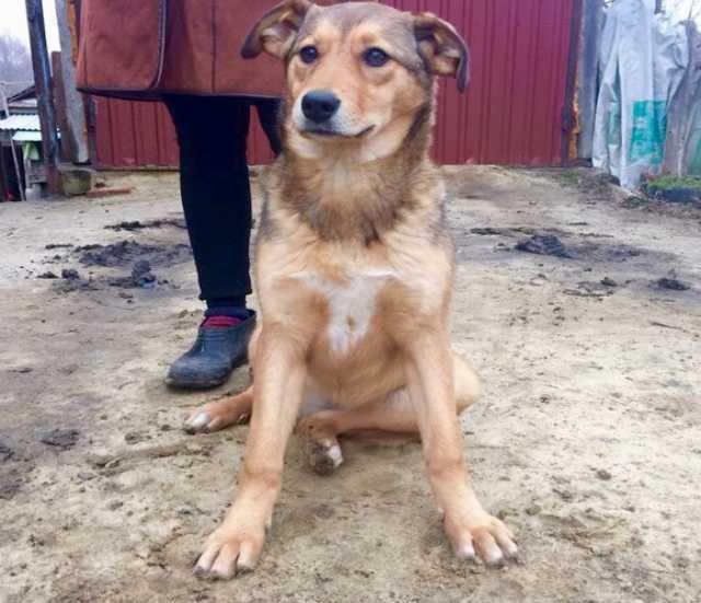 Доска объявлений саратов собаки дать объявление о сдачи квартиры в чебоксарах