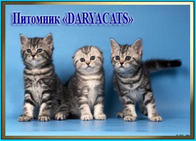 Продам котят подать объявление москва фотомодели 7 - 14 лет частные объявления