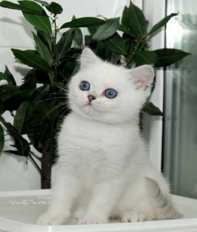 Продам мальчик с синими глазками