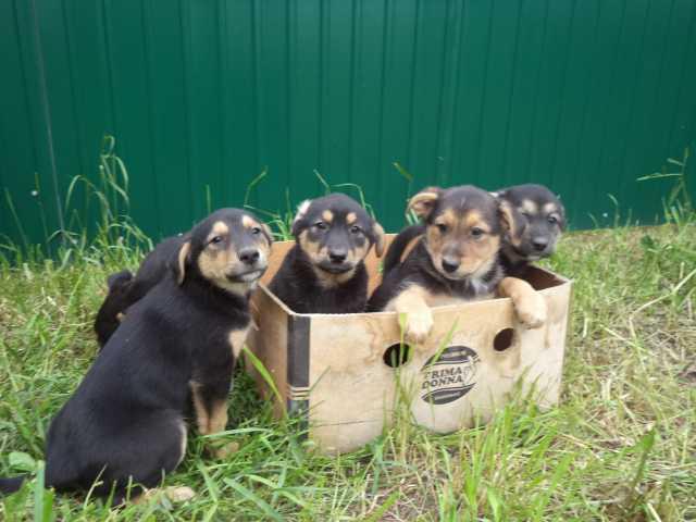 Отдам в дар собаку объявление н.новгород можно подать объявление алматы