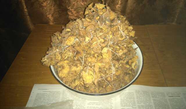Продам грибы лисички сушёные