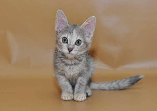 Разместить объявление приму в дар котят москва свежие вакансии на азс сокар