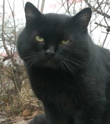 Отдам даром Роскошный котэ в поисках дома