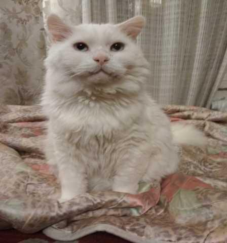 Отдам даром Ищем дом для котика Пармезана