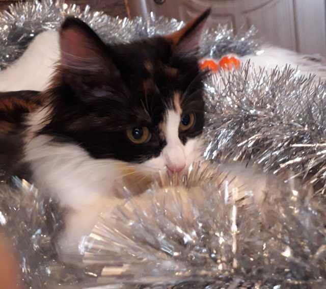 Отдам даром: Котенок в добрые руки