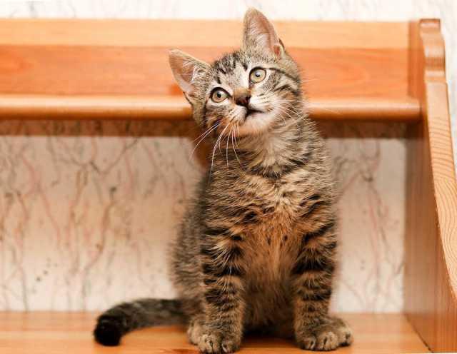 Отдам даром Тошка, весёлый котёнок полосатик в дар