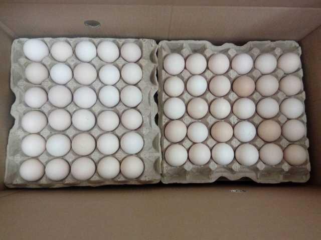 Продам Инкубационное яйцо бройлеров
