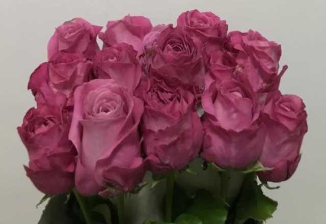 Продам Цветы оптом и в розницу,букеты
