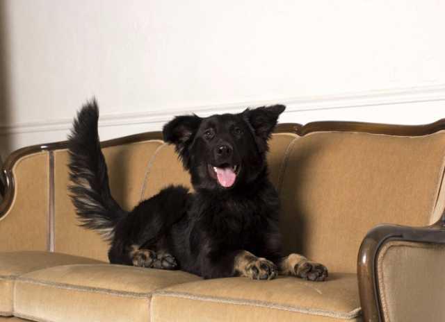 Отдам даром Молодая активная собака Честа в хорошие