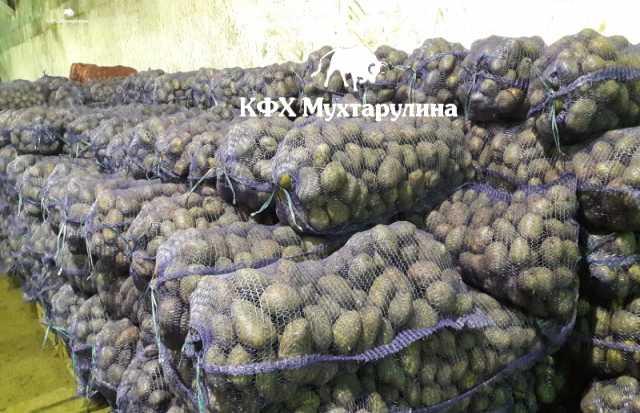 Продам Картофель Гала оптом в Кемерово