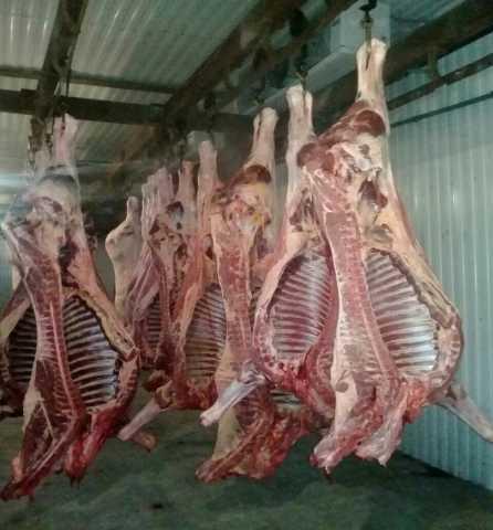 Продам мясо