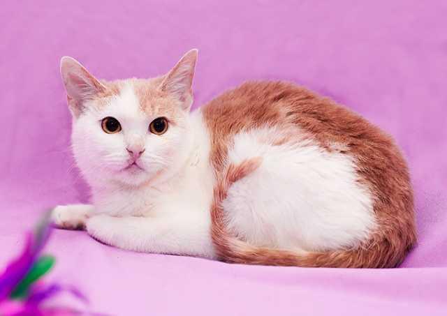 Отдам даром домашний котенок Василиса в добрые руки