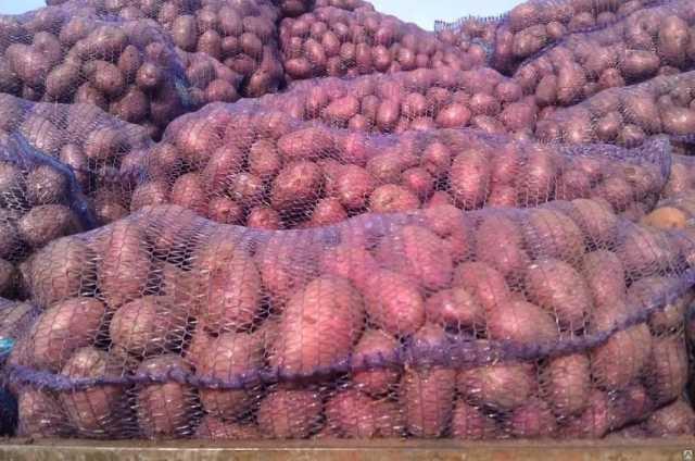 Продам Картофель оптом от КФХ Розара калибр 5+