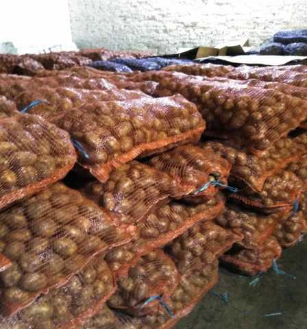 Продам Картофель оптом от КФХ Невский калибр 5+