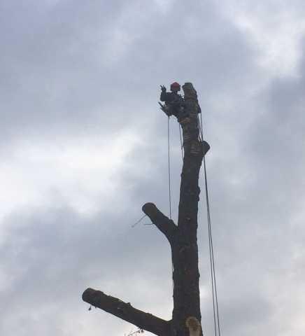 Предложение: Спилить дерево, удаление пней.