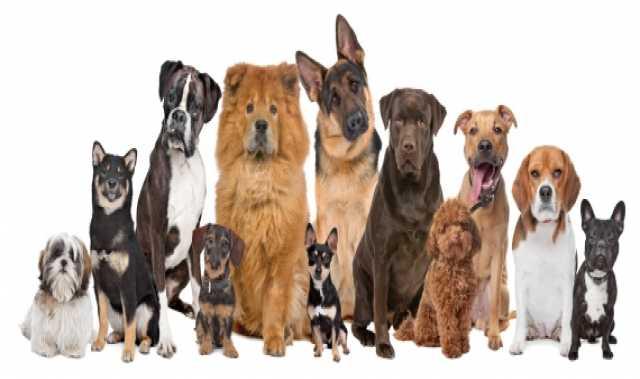 Куплю: Щенки/собаки