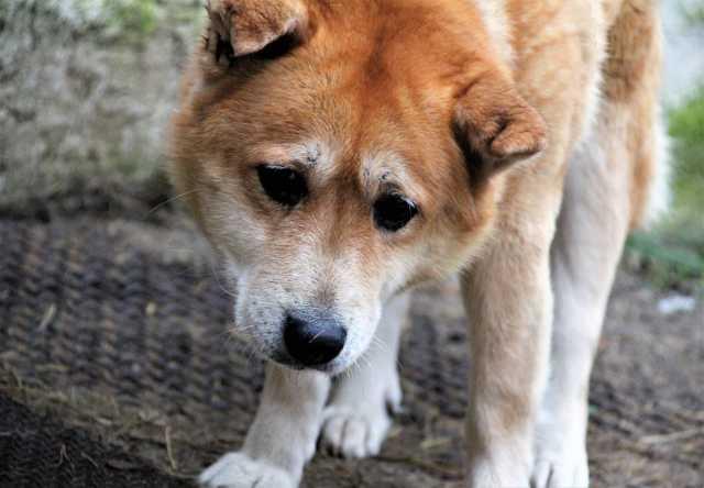 Отдам даром Собака Ассоль ищет дом!