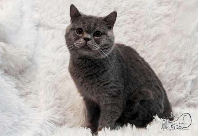 Продам Плюшевый котик