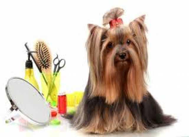 Предложение: Стригу красиво и профессионально собак