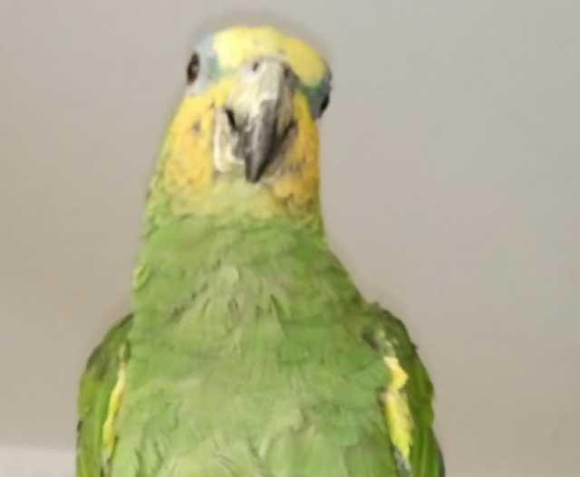 Приму в дар Возьму большого попугая любое состояние