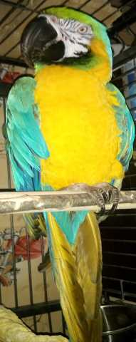 Приму в дар Попугай большой в любом состоянии возьму